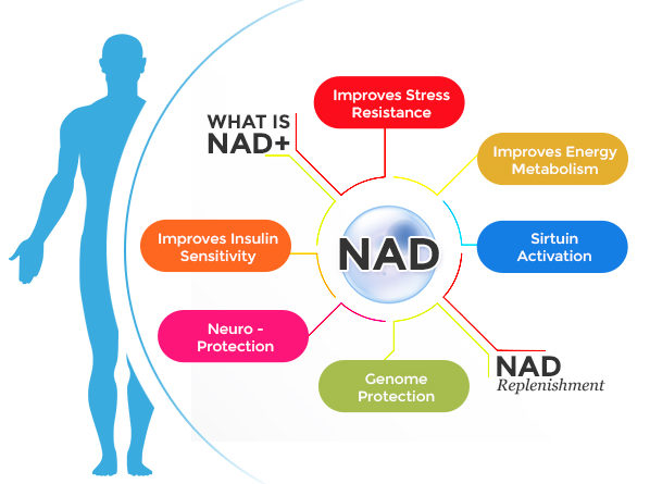 The ABC's of NAD+