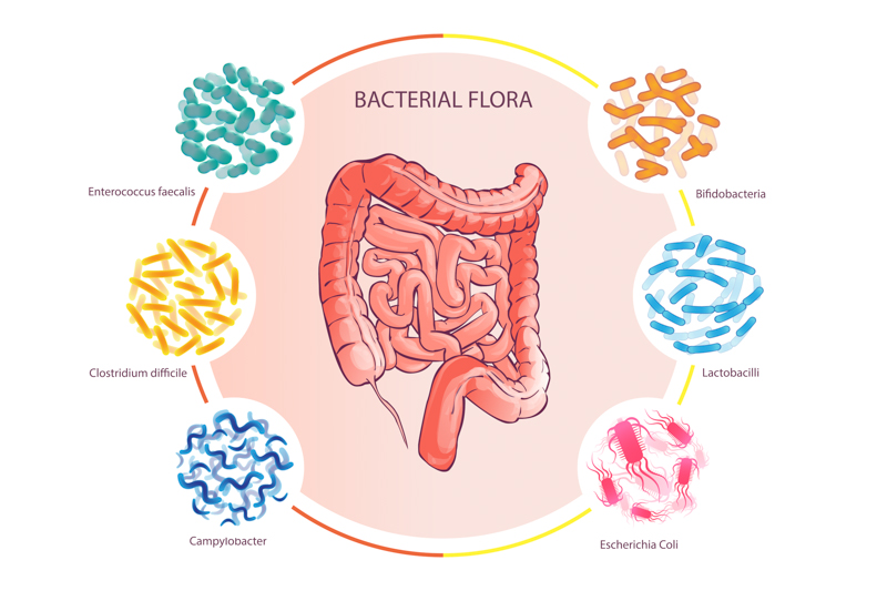 The Microbiome: Invisible to the eye, significant to the body.
