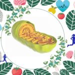 Mitochondria and health